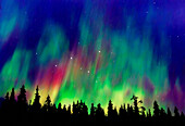 Northern lights above taiga forest near Talkeetna, Alaska, USA, America