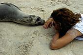 Sealion contacts human, Espanola Island, Galapagos Ecuador, South America