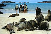 Sealions and tourists on a sunlit beach, Espanola Island, Galapagos Ecuador, South America, America
