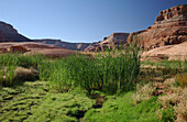 Landschaft, Lake Powell, Arizona, Utah, USA