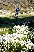 A man mountainbiking near a field full of flowers, Jakobshavn, Ilulissat, Greenland