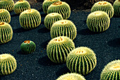 Cactus garden, Lanzarote, Canary Islands, Spain