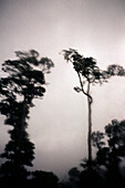 Trees of the rain forest in front of grey clouds, Fiji, South Pacific
