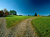 Paths through meadows, Werdenfelser Land, Upper Bavaria, Germany