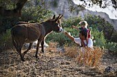 Father and little daughter feeding donkeys, Scarpanto, Dodecanese, Greece