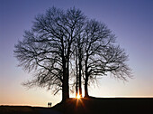 People by trees, sunset, Upper Bavaria, Germany