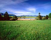 Landschaft am Forggensee, Alpenpanorama, Oberbayern, Deutschland