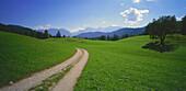 Footpath through meadows, Upper Bavaria, Germany