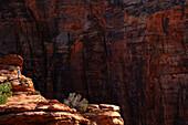 Rockface at Canyon Overlook, Zion Valley National Park, Utah