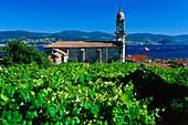 Vine gardens and Samieira church,Ria de Pontevedra,Province Pontevedra,Galicia,Spain