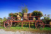 Flower Decorated Cart near Bennwihr,Elsass,France