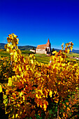 Chapel in the Vineyards near Hunawihr,Elsass,France