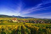 Vineyards at Hunawihr,Elsass,France