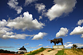 huge sculpture of a bull, brewery advertisement, Rakvere, Estonia