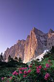Laliderer Range with Rhododendron, Karwendel Mountain Range, Tyrol, Austria