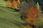 Alpine pasture with hay barn, surrounded with autumn coloured trees