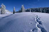 Snow covered alpine pasture with footsteps, Riesenalm, Bavarian Alps, Upper Bavaria, Germany
