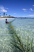 Traditional Coconut Leaf Fishing,Yoroma Island, Yasawa Islands, Fiji