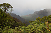 Tropical Vegetation and Na Pali Coast,View from Kalalau Lookout, Kokee State Park, Kauai, Hawaii
