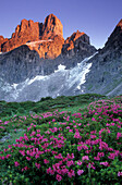 Bischofsmuetze in the early morning light towering over a field of alpine roses, rhododendron, Dachstein range, Salzburg, Austria