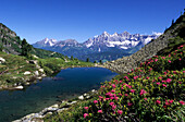 Lake Gasselsee with alpine roses, rhododendron and the Dachstein mountain range in the background, Schladminger Tauern, Styria, Austria