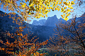 Autumn mood with coloured leaves at lake Gosausee with view across to Schneebergwand and Hochkesseleck, Dachstein mountain range, Upper Austria, Austria