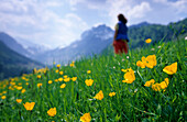Field of flowers with hiker and mountain range in the background, Raineralm, Kaiser range, Tyrol, Austria