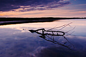 Coastline at sunset, branch lying in water, Baltic Sea, Schleswig-Holstein, Germany