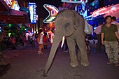 A elephant and mahout begging at Soi Cowboy, red-light district,  Th Sukhumvit, Bangkok, Thailand