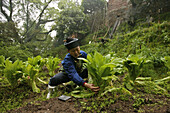 A nun working in the kitchen garden, Nunnery Huanting, Heng Shan South, Hunan province, China, Asia