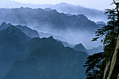 cliffs at south Peak, pine trees, mountain scenery, Hua Shan, Shaanxi province, Taoist mountain, China, Asia