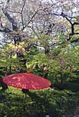 Red japanese umbrella in a garden, Happo-en Garden, Tokyo, Japan