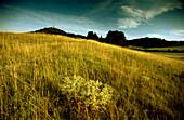 Blick über grasbewachsene Hügellandschaft auf Veste Wachsenburg, Holzhausen, Thüringen, Deutschland