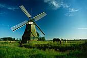 Drainage mill Wynhamsterkolk, Ditzumerhammrich, East Friesland, Lower Saxony, Germany