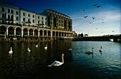 Swans on Alsterfleet, Alster Arcades in background, Hamburg, Germany