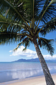 Palm Tree and View of Hinchinbrook Island, Cardwell, Queensland, Australia