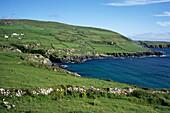 Beara Peninsula Coastline, Near Garnish, County Cork, Ireland