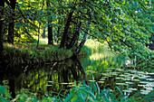 Alluvial forest, creek, Bioshere reserve Spreewald, Brandenburg, Germany
