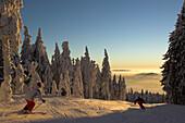 Zwei Skiläufer am Hochficht bei der Abfahrt, Mühlviertel, Oberösterreich, Österreich