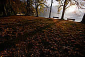 Shore of lake Kochelsee in Autumn with Herzogstand in the background, Bavaria, Germany