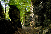 Deciduous forest and rocks at Mullerthal, Luxembourg, Europe