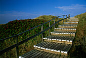 Wooden staircase over dunes, Rantum, Sylt Island, Schleswig-Holstein, Germany