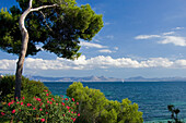 Küstenlandschaft bei Badia de Alcudia, Mallorca, Spanien
