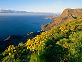 Steep coast with Puerto de las Nieves in the background, Faneque mountain, Tamadapa natural park, west coast, Gran Canaria, Canary Islands, Atlantic Ocean, Spain