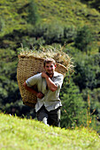 Young farmer harvesting hay, Hohe Tauern, Salzburger Land, Austria