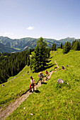 Three hikers walking uphill, Bichlalm (1731 m), Grossarl Valley, Salzburg, Austria