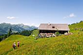 Hikers arriving at Bichlalm 1731 m, Grossarl Valley, Salzburg, Austria
