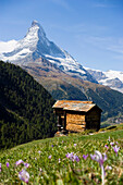 A solitary wooden house on the mountainside, Findeln, Matterhorn 4478 m, in the background, Zermatt, Valais, Switzerland