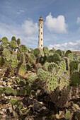 Kakteen vor California Lighthouse, Aruba, ABC-Inseln, Niederländische Antillen, Karibik
