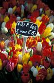 Flowermarket, Amsterdam, Holland, Netherlands